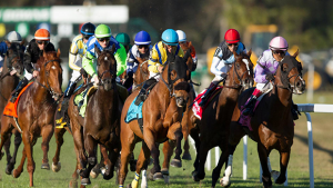 A Day at the Tampa Bay Downs