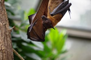Feeling a little batty? Come hang with friends @ Student Activity Building, Room 117