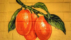 Saint Leo sponsoring Kumquat Festival on January 26 @ Pasco County's historic courthouse